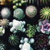 Cacti Colour Scheme