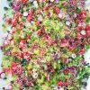 [salad]