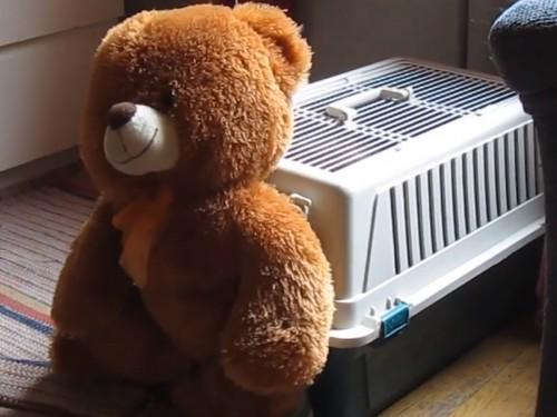 teddy-500x375c
