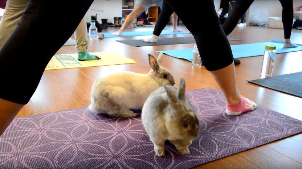 bunny-yoga-2