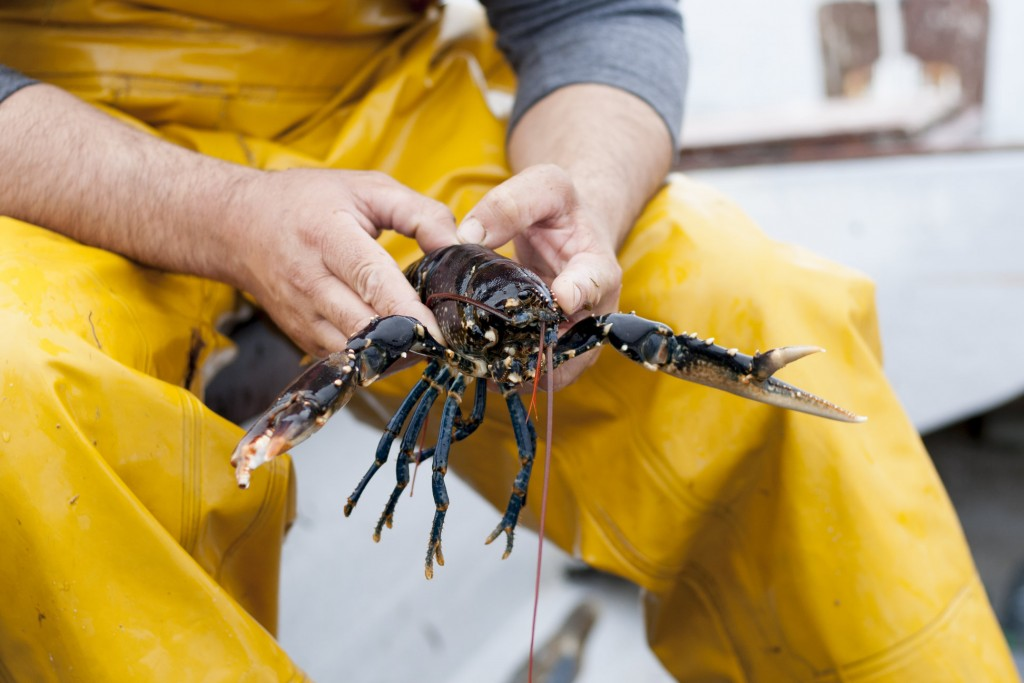 Ballynahinch Lobster Marlene Wessels